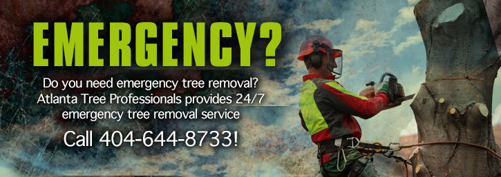 Emergency tree removal is part of our service.