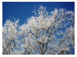 Inspect your property for ice storm tree damage and debris.