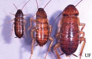 Cockroach Line Up