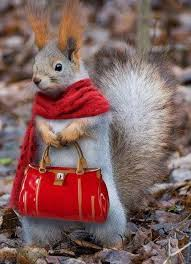 squirrelwithbag