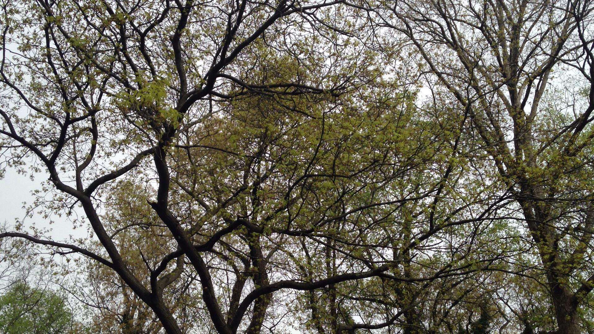 Tree Pruning Atlanta