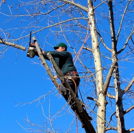 DIY tree trimming is a no-no; call a tree professional.