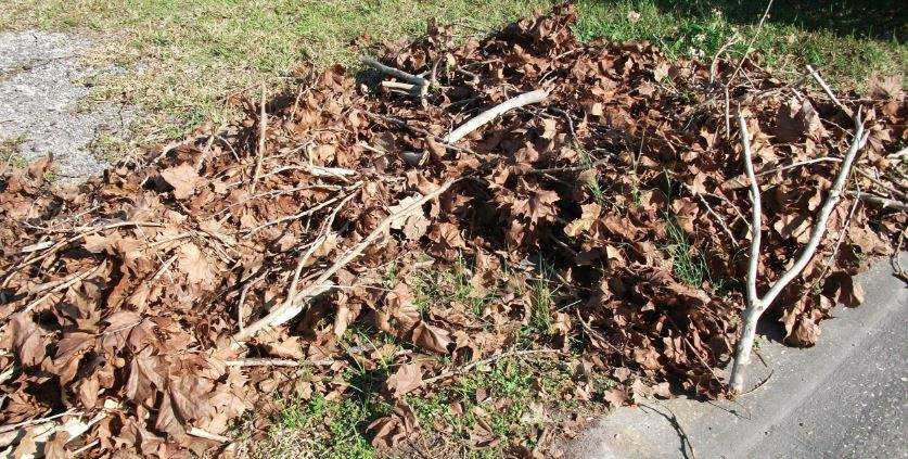 Cutting down a tree may make sense if the tree produces a lot of falling debris and leaves.