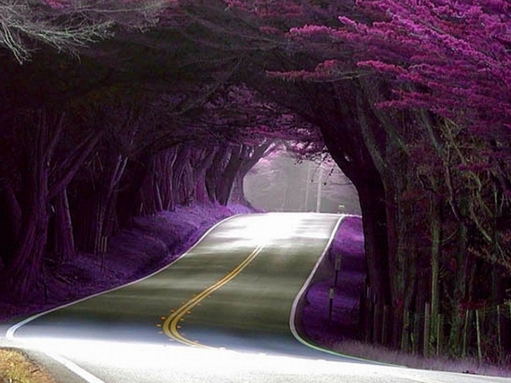 Find amazing tree tunnel landscapes in Portugal, too