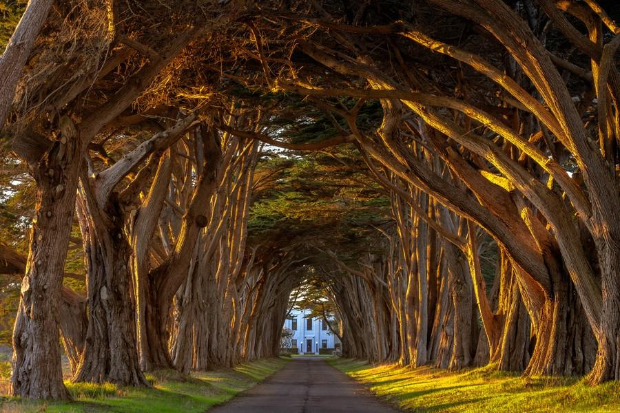 The cypress tree tunnel landscape in California.