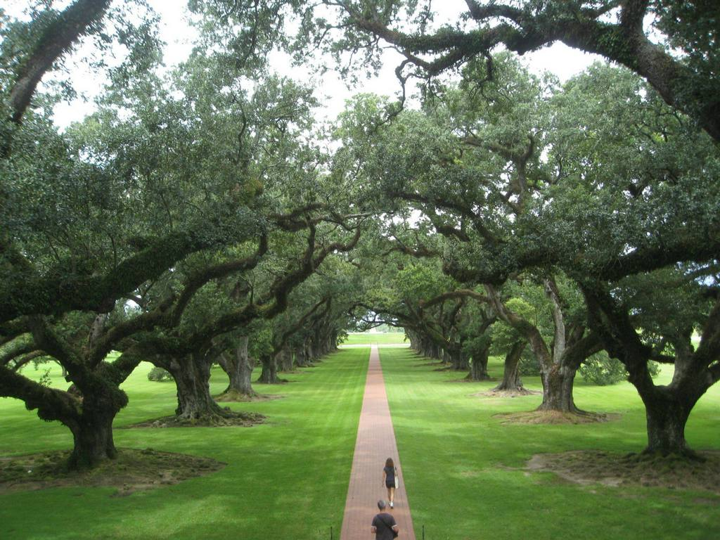 Oak Alley in Louisiana