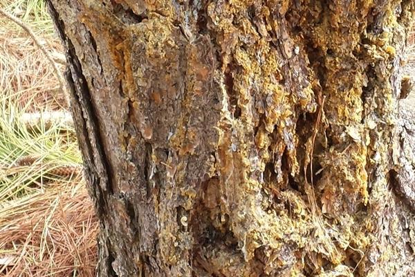 Call ATP for preventive tree service.