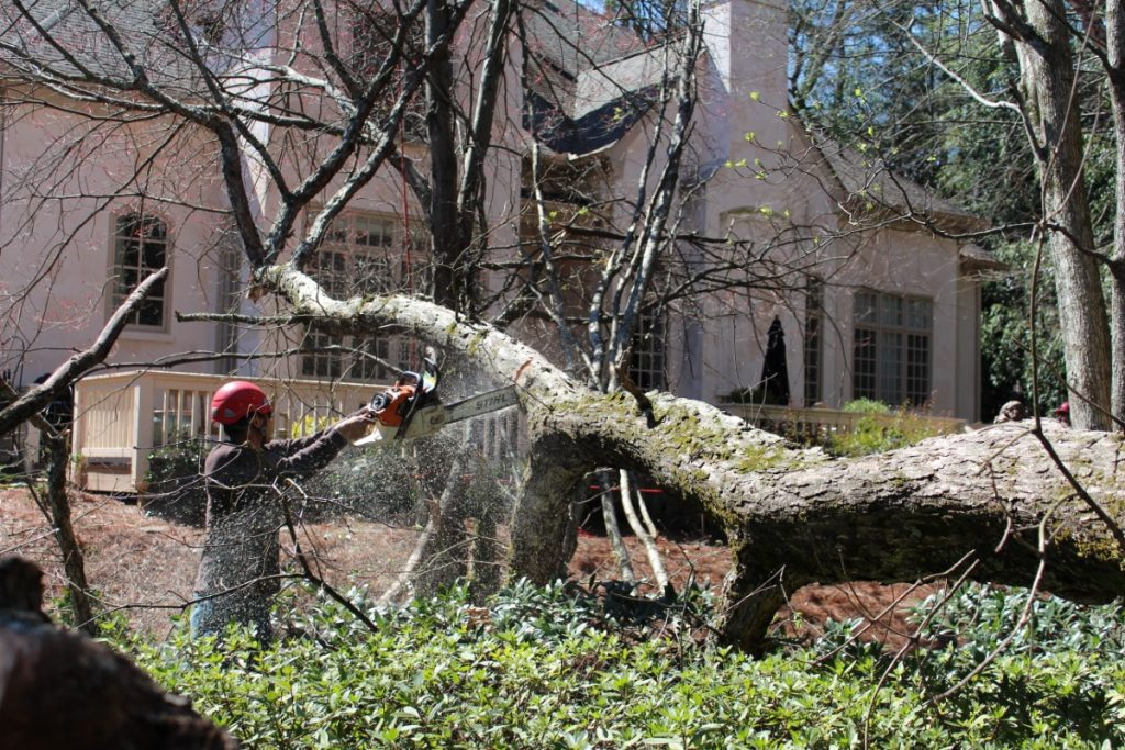 The tree service in Atlanta area to call first.